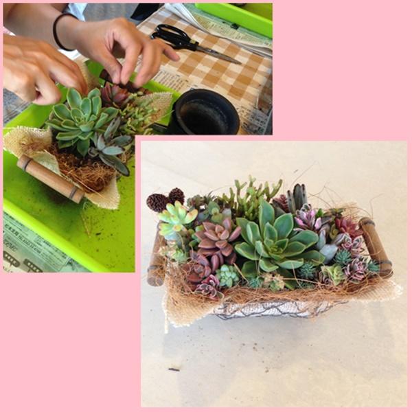 多肉植物 3新