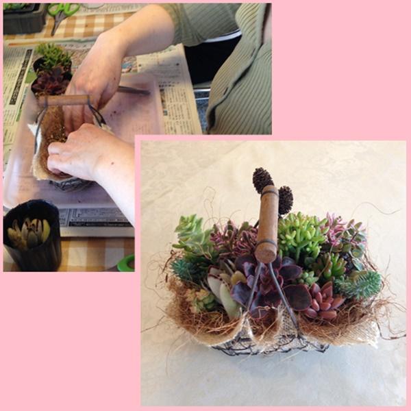 多肉植物 1
