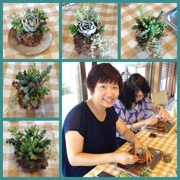 多肉植物 苔玉
